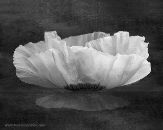 fiore-bianco