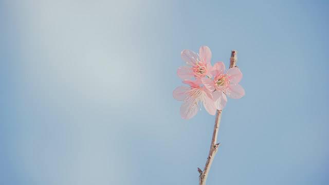 fiore èpesc