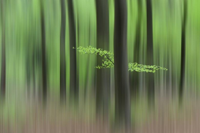 strano bosco