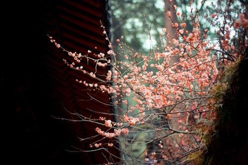 bella foto fiorellini