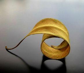 foglia gialla