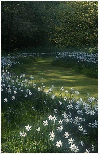 cammino fiorito